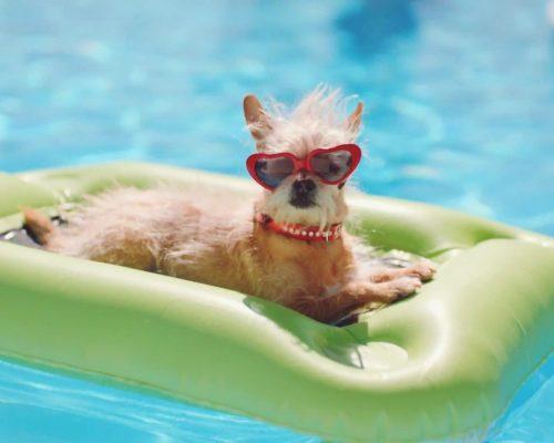 dogs-swimmingpool